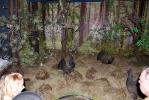 Музей животных Беловежской пущи